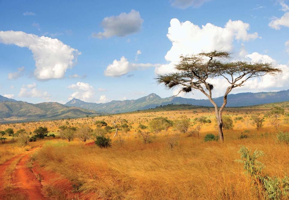 الدول التي تشترك في الحدود مع كينيا