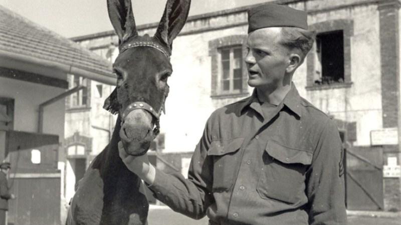 الحيوانات التي شاركت في الحرب العالمية