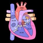 心臓のトラブルと性格スピリチュアルな意味
