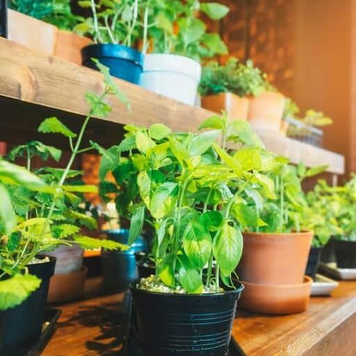 indoor vegetables