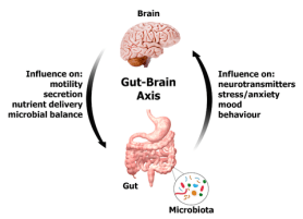 Gut-to-Brain or Brain-to-Gut? | Naturopath Ananda Mahony