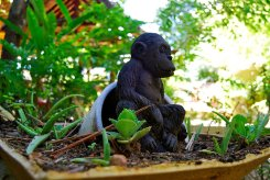 Hanuman-Koh-Phangan