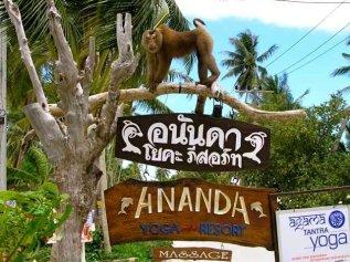 Koh Phangan Monkeys