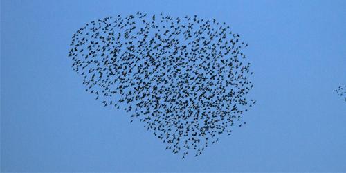 vogels5