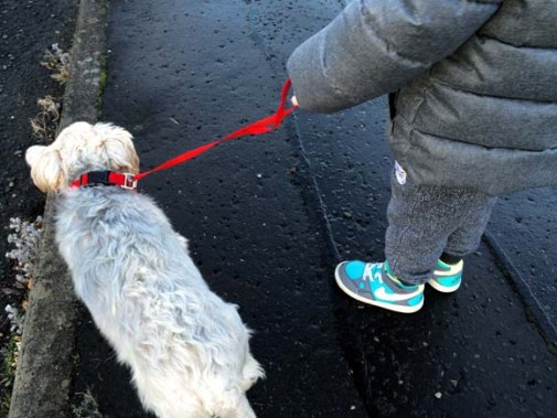 Doddle leash