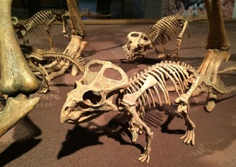 Ananyah- Hatching the Patch- Kelvingrove- Dinosaur Babies