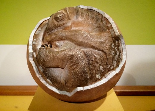 Ananyah- Hatching the Patch- Kelvingrove- Dinosaur Fetus