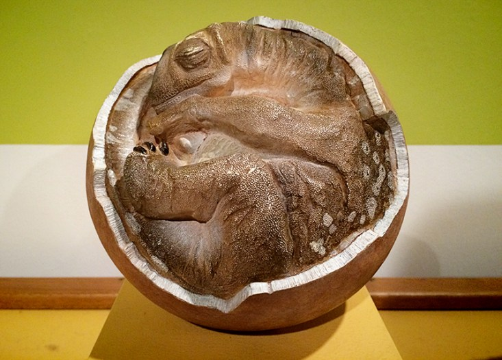 Ananyah- Hatching the Patch- Kelvingrove- Dinosaur Fetus