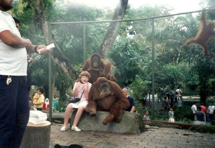 Singapore Zoo- Orangutan