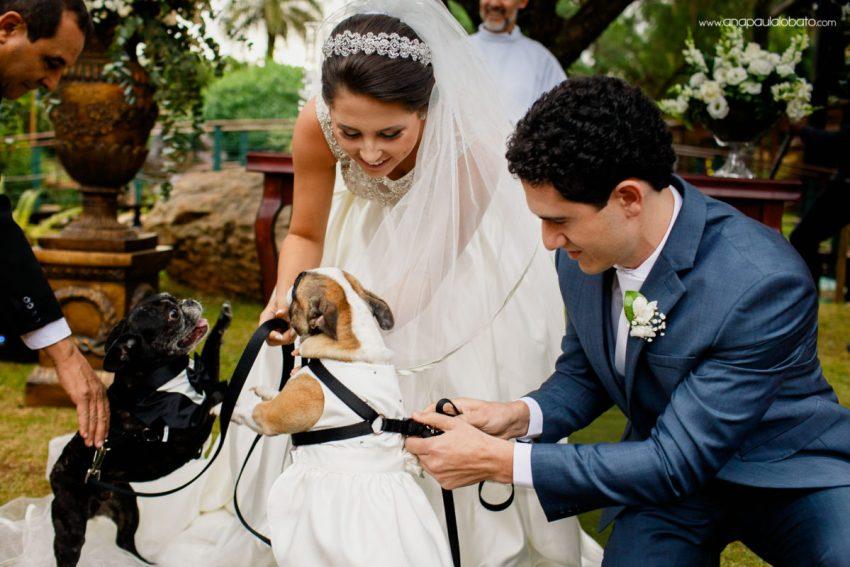 cachorros no casamento