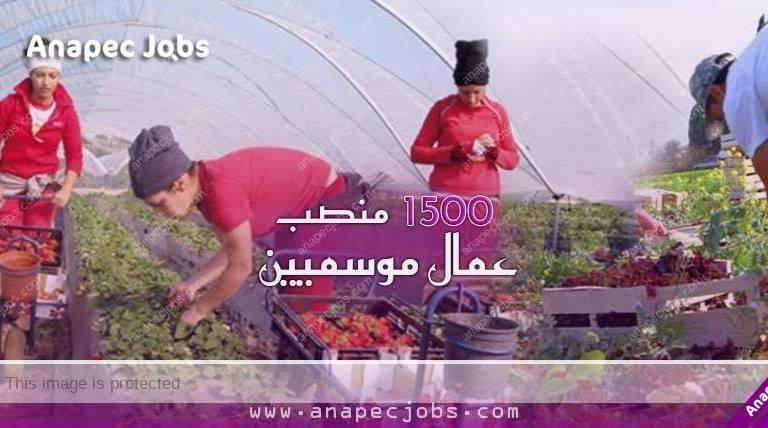 (1500) Aide Agricole Polyvalent Ou Saisonnier sur LARACHE