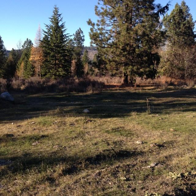 2014 cattle grazing area
