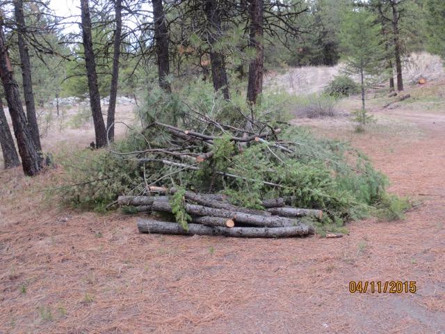 Limbing Fallen Trees