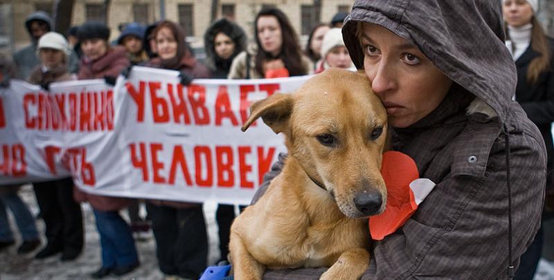 Акция против отстрела бездомных собак