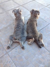 Dogs in the sun...