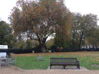 Ah, Greenwich Park!