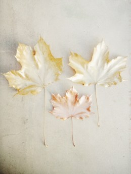 golden copper leaves