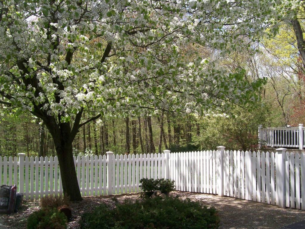 Picket Fences 29