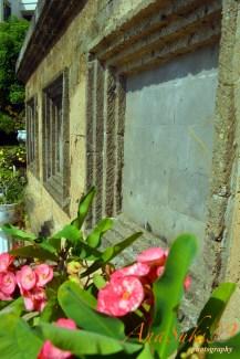 The Garden's Wall