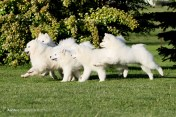 Our Puppies at play