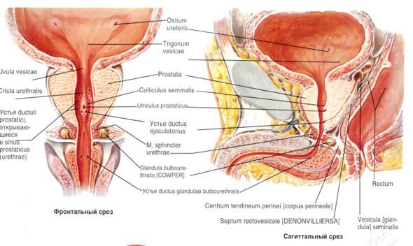 stymulacja prostaty do montażu)