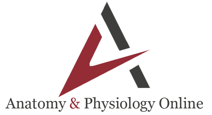 VTCT Anatomy, Physiology & Pathology Level 3 (RQF) Online Training Course