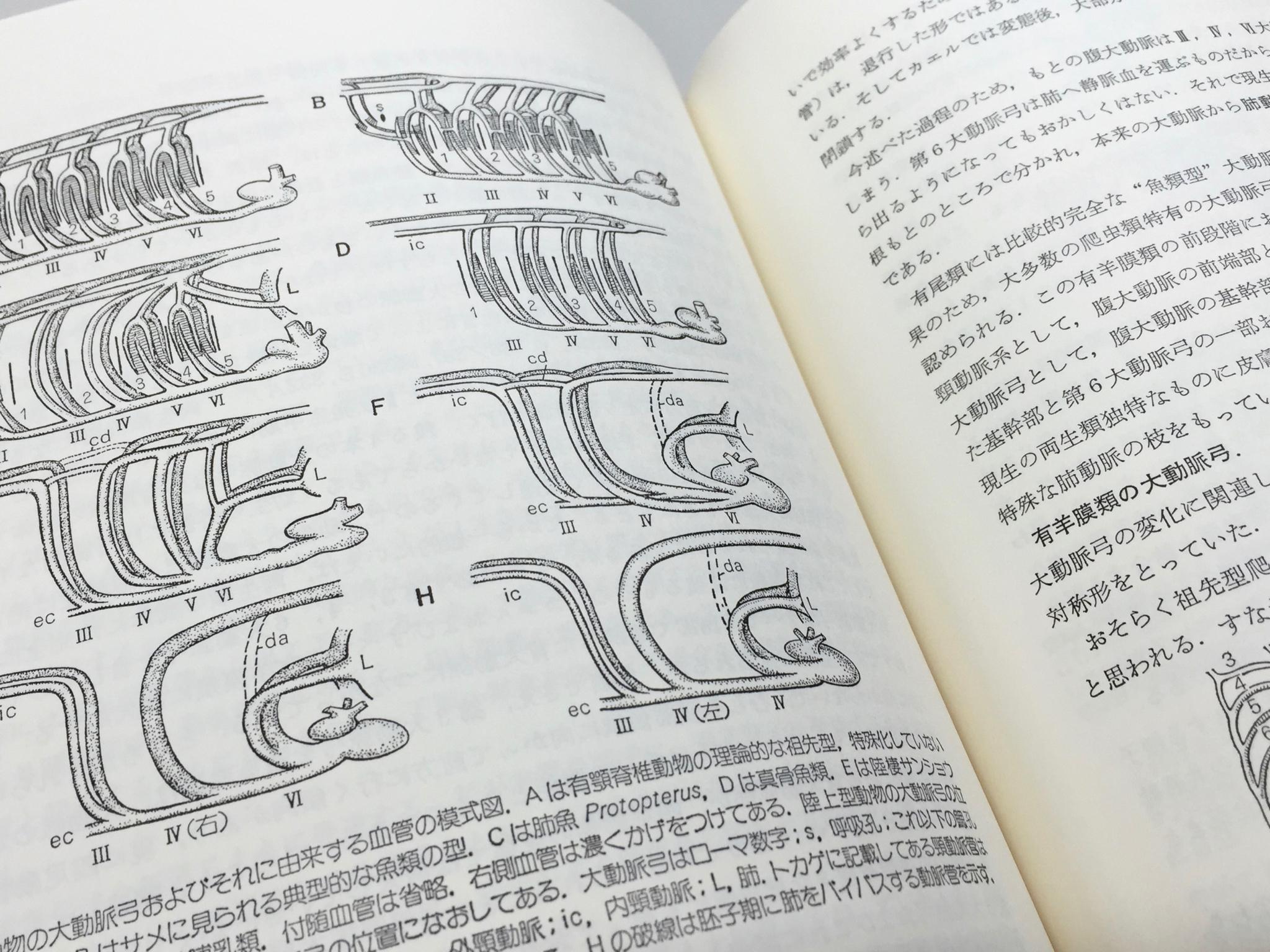 日本語版の紙面。活版印刷だったのをスキャンしたようだ。