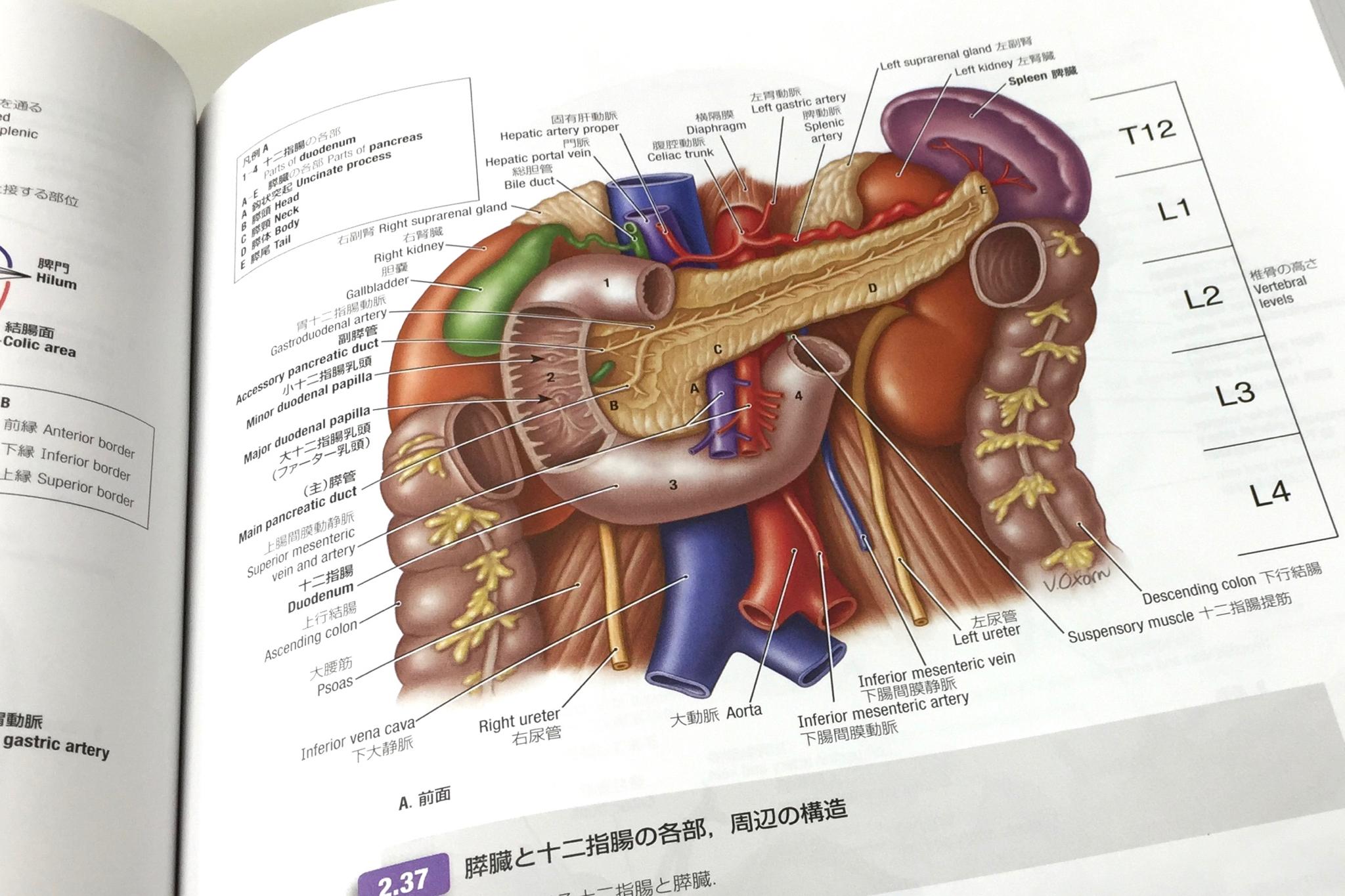 膵臓十二指腸