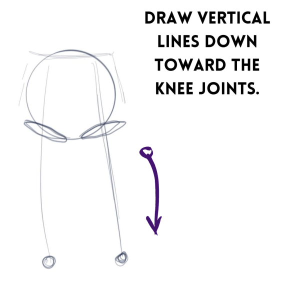 Drawing the thighs
