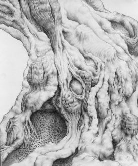 Gnarly Thing, graphite on paper, 2008, by Jennifer Ramey