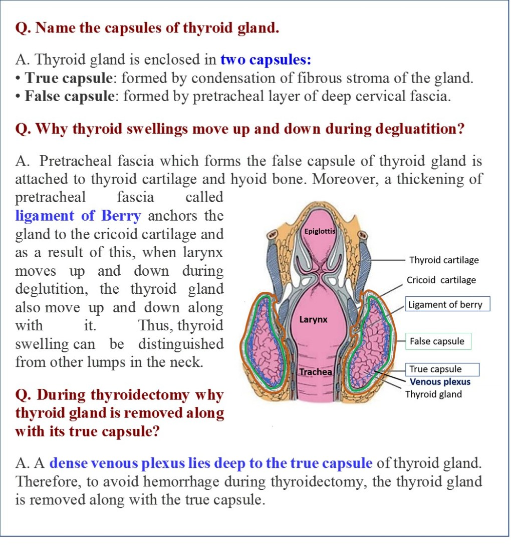 Capsules of thyroid gland