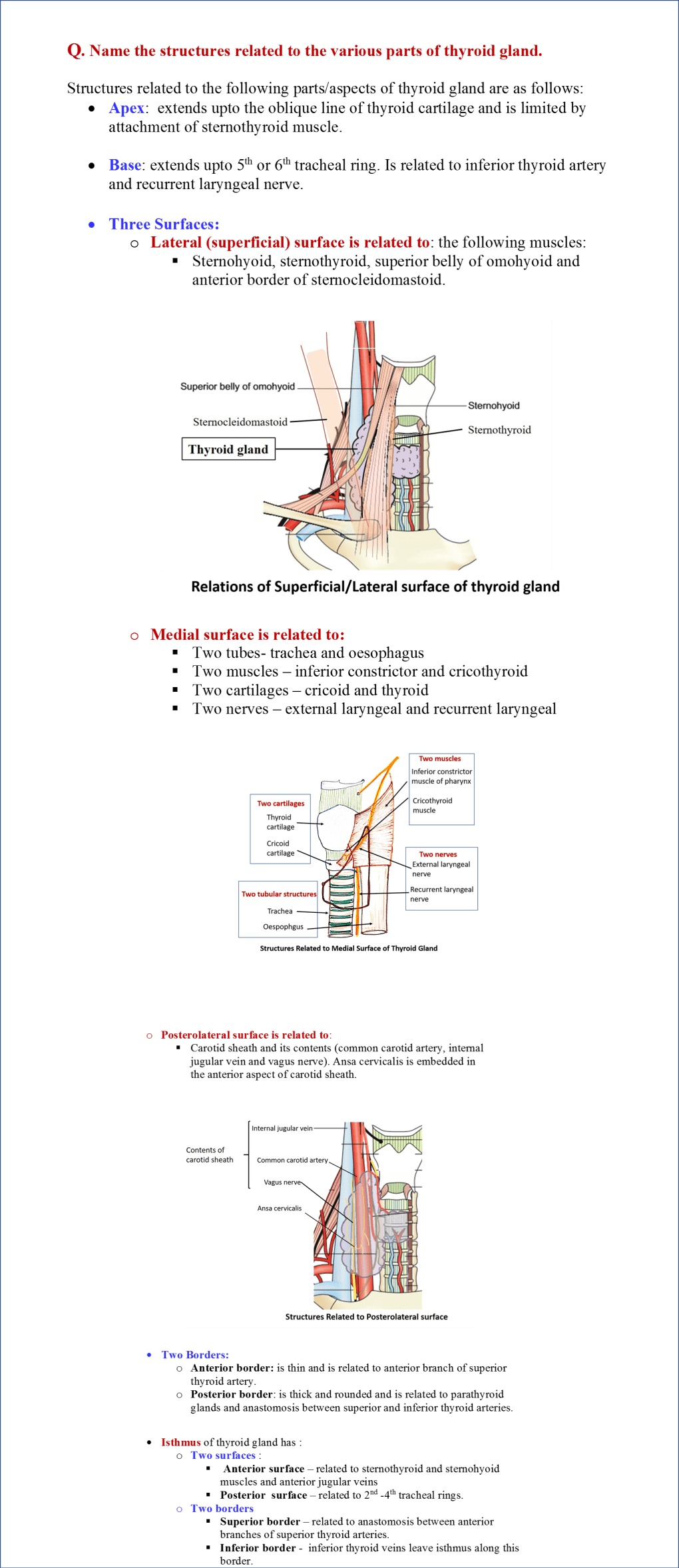 relations of thyroid gland