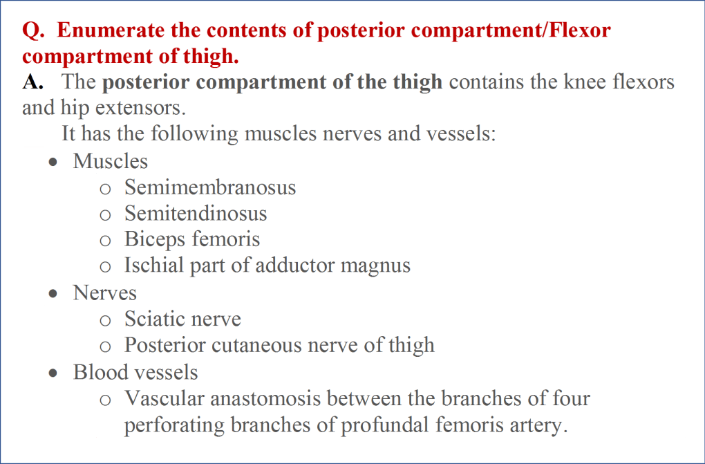 Content of posterior compartment of thigh