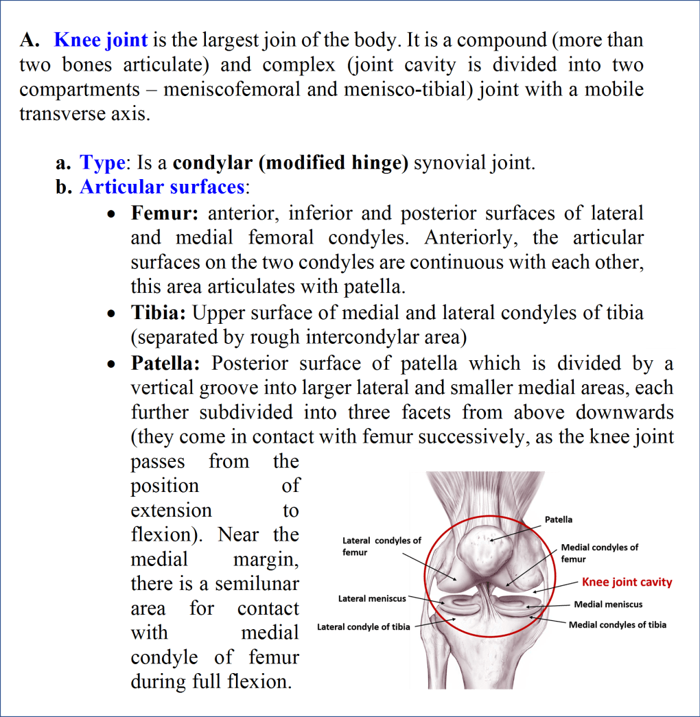 Knee Joint- Type and articular surfaces