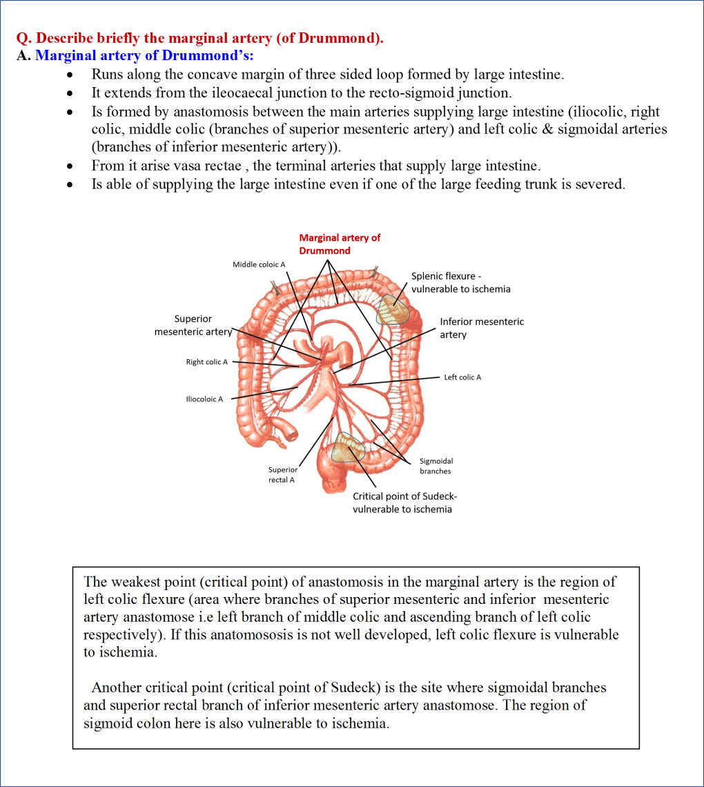 Formation of Marginal Artery of Drummond and Critical Points