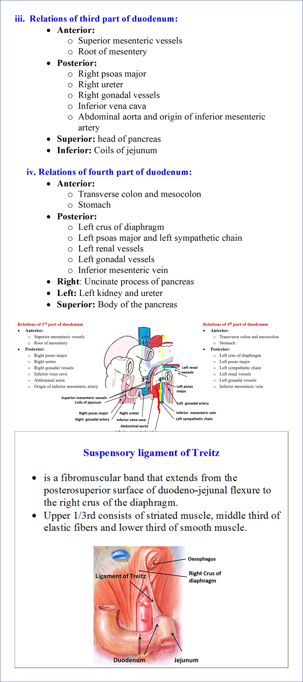 Relations of Third and Fourth Parts of Duodenum