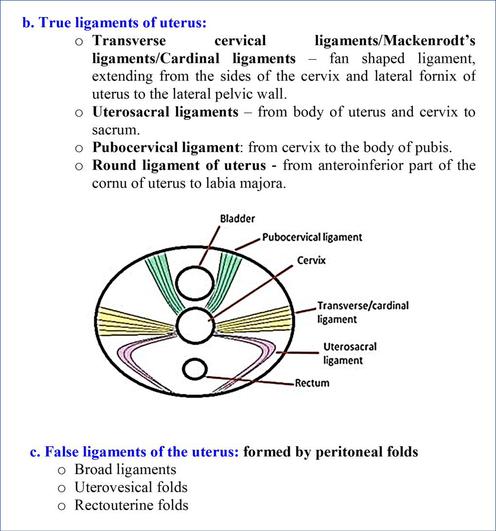 True and False Ligaments of Uterus