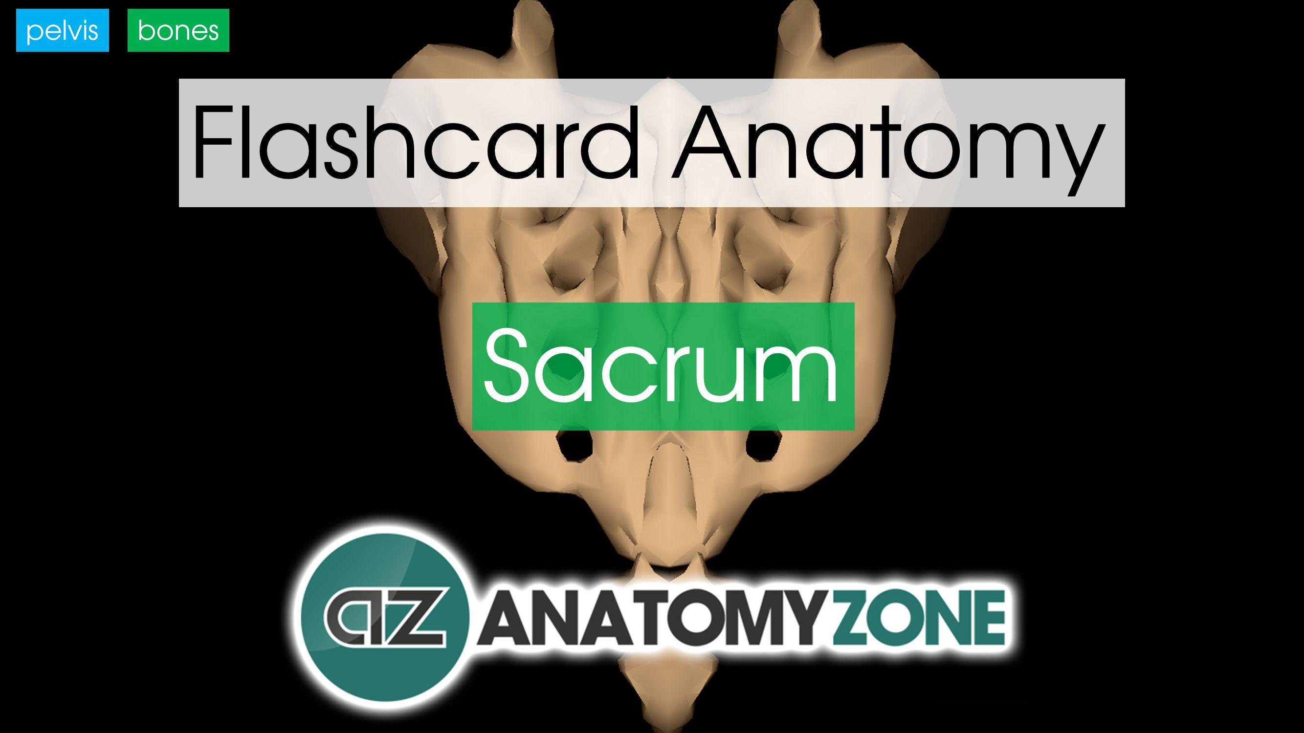 Anatomy Zone