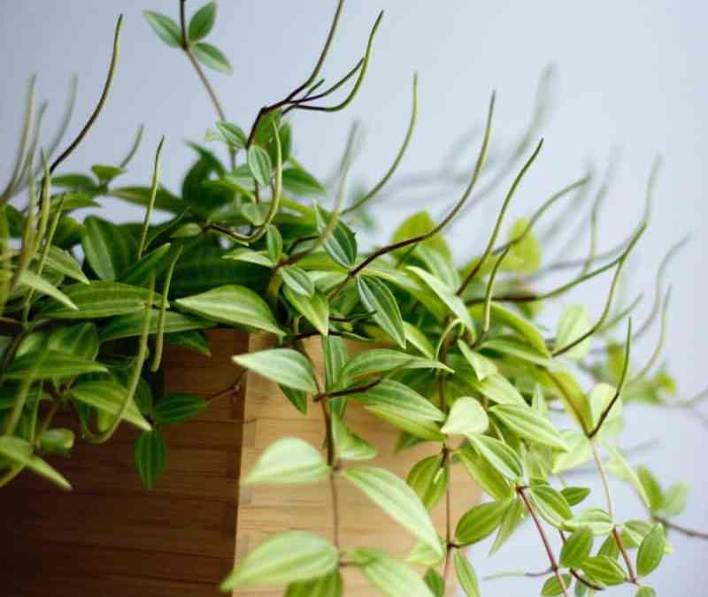 Buying Houseplants Online: Why People Want To and How to Make It a Great Experience
