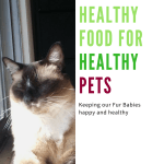 Healthy Pet Food Grain Free