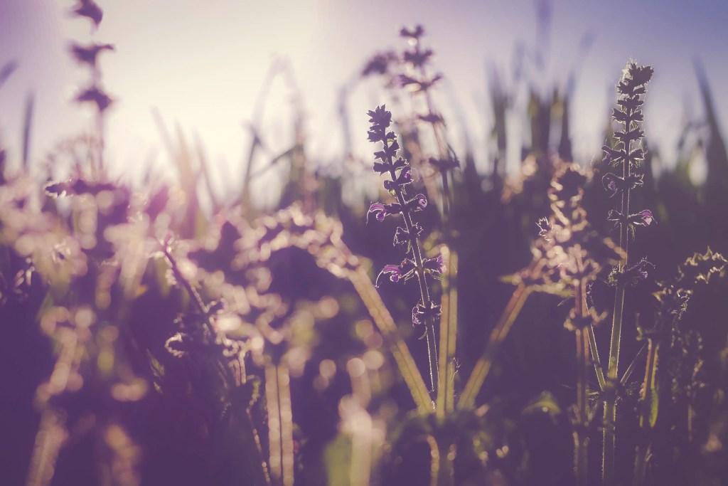 Lavender oil, de-stress, calm your mind