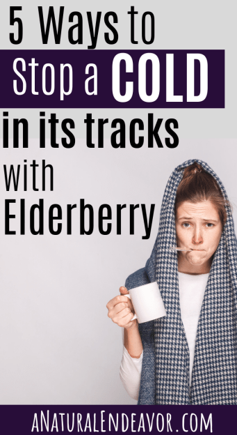 Sambucus, Elderberry, how to fight off a cold with elderberry syrup