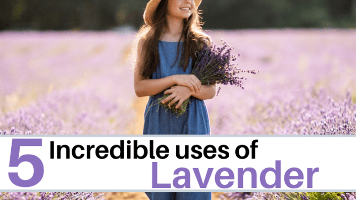 Incredible uses of lavender