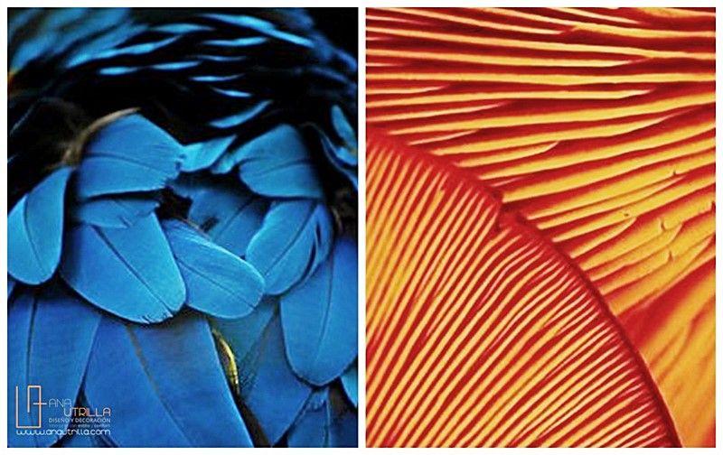 Aplica color en tu decoración de interiores a través de impactantes combinaciones