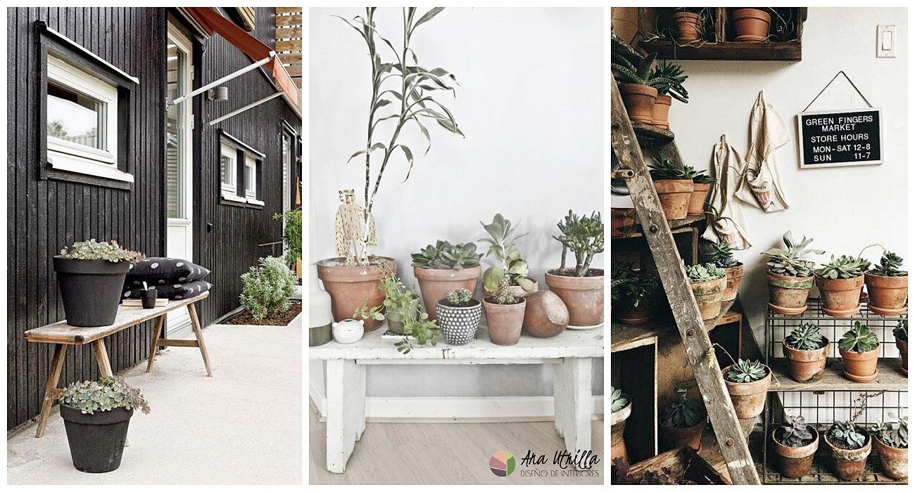 Plantas aromáticas para decorar tu terraza en verano