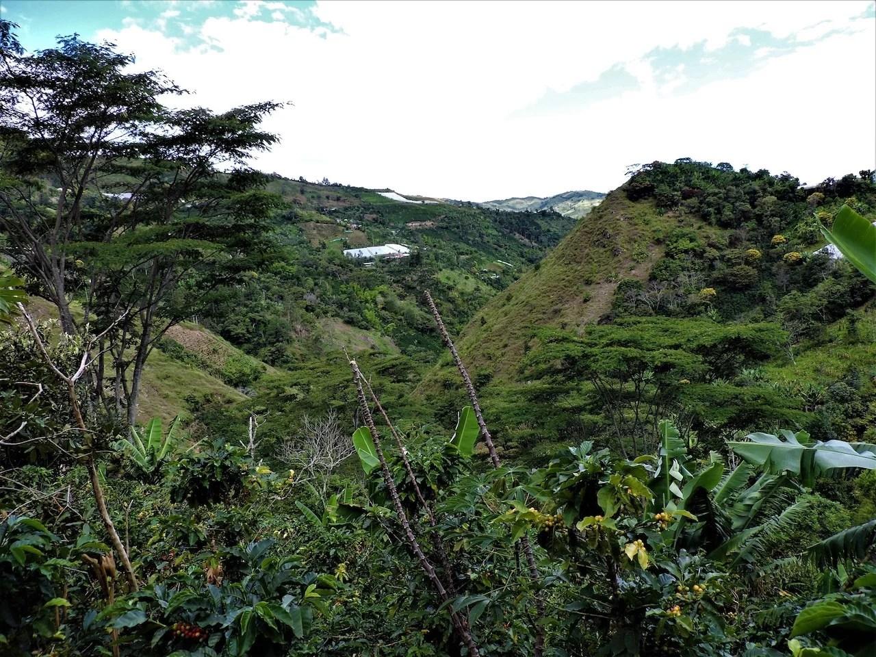 Anbassa artisan torréfacteur café Colombie Narino plantation