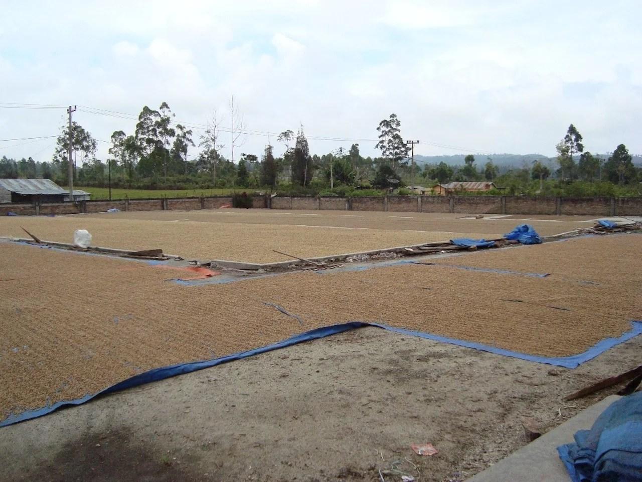 Anbassa artisan torrefacteur café sumatra shere khan plantation