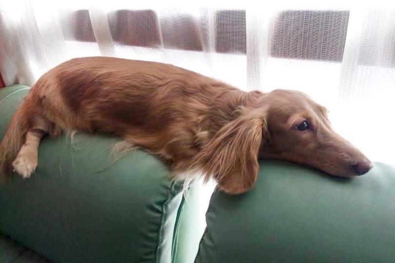 doghealth-08062018-2