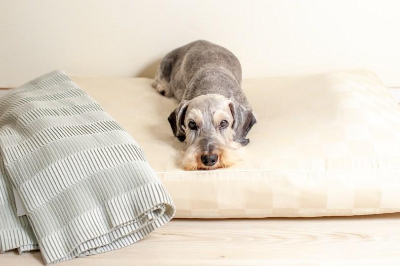 犬用ベッド選びは「厚み」に注目しよう! 犬の洗える日本製ベッド:ロイヤルベッド - アンベルソ