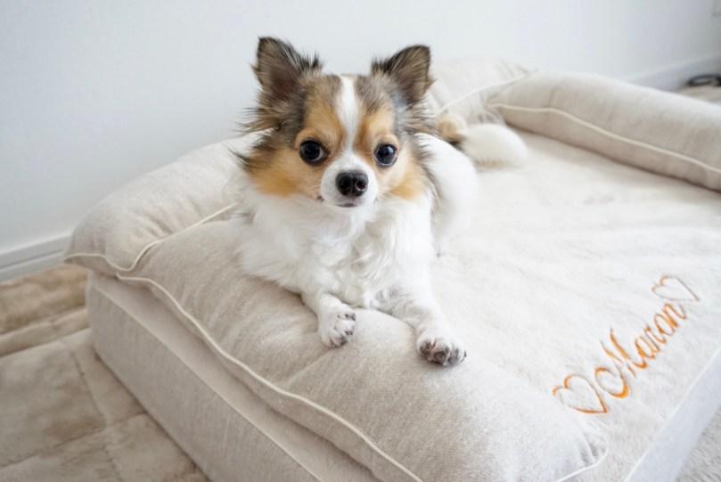 チワワ 犬の洗える日本製ベッド:ロイヤルベッド - アンベルソ